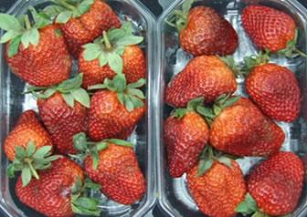 TarriTech Treatment of fresh strawberies